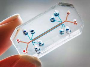 microfluidics-300x225